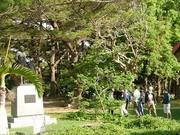 植物園見学